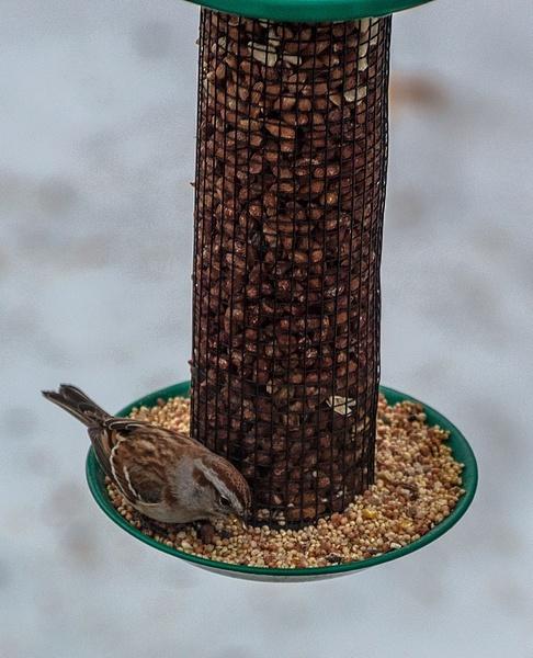 2017 Bird Feeders in Buckley, Michigan by SDNowakowski