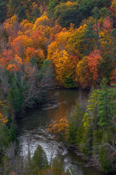 2017 Fall Colors along The Manistee River in Northern Michigan. by SDNowakowski