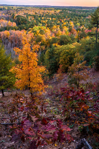 Fall Colors on The Manistee River in The Buckley...