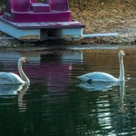 2020 Early Spring on Lake Gitchegumee in Buckley, Michigan
