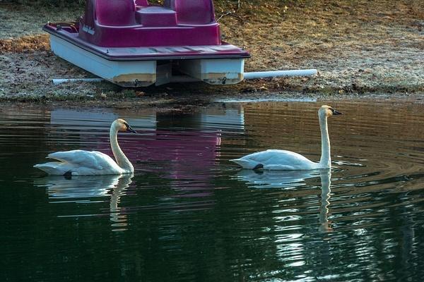 2020 Early Spring on Lake Gitchegumee in Buckley,...