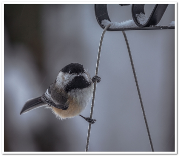 2021 Bird Feeder Visitors in February 13th & 14th by...