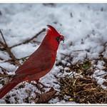 2020 & 2021 Dayhuff Lake Winter Visitors to My Bird Feeders