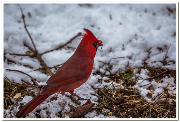 2020 & 2021 Dayhuff Lake Winter Visitors to My Bird...