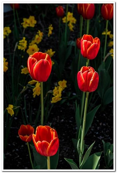 2021 Spring Flowers 2_29 by SDNowakowski