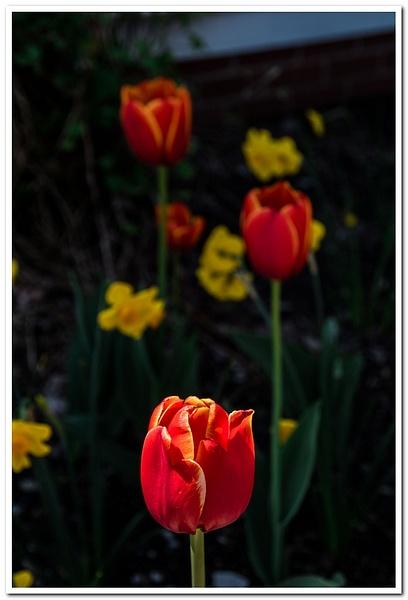 2021 Spring Flowers D3500 DNG 2_30 by SDNowakowski