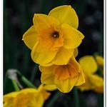 2021 Spring Flowers