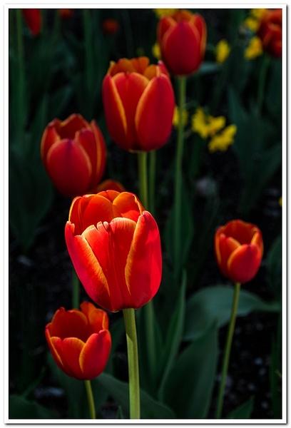 2021 Spring Flowers by SDNowakowski