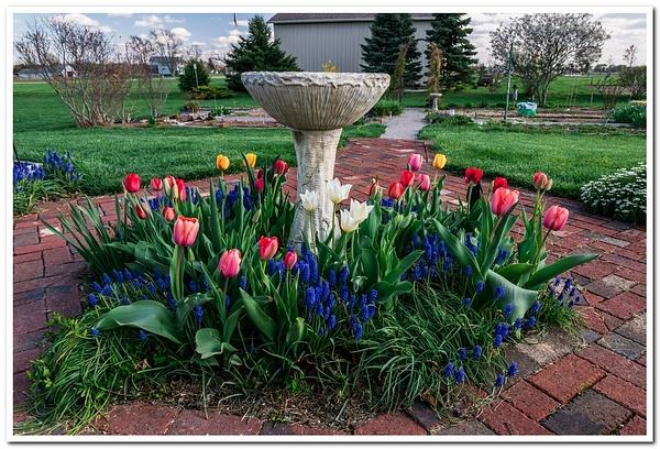 2021 Spring Flowers by SDNowakowski by SDNowakowski