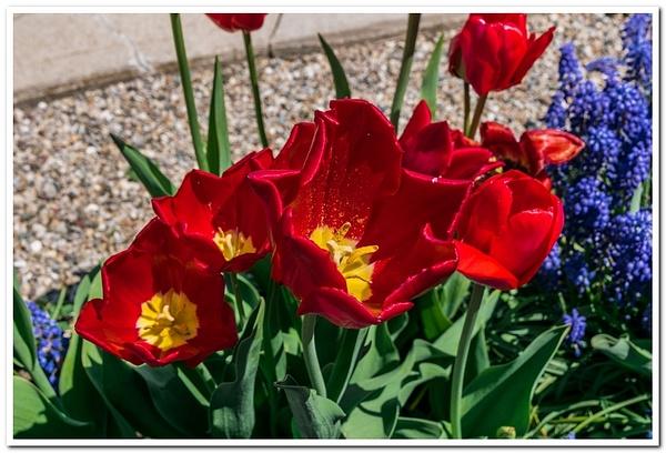 2021 Spring Flowers 2_75 by SDNowakowski