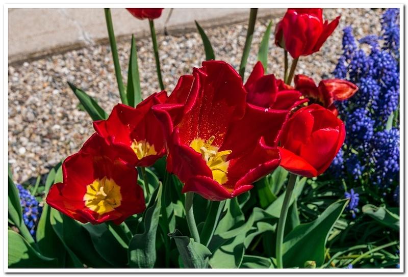 2021 Spring Flowers 2_75