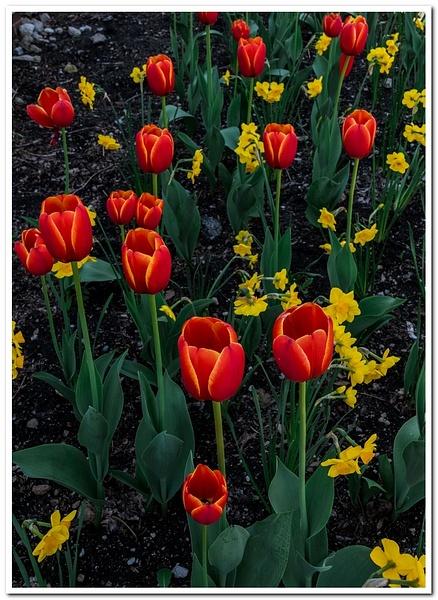 2021 Spring Flowers 2_41 by SDNowakowski