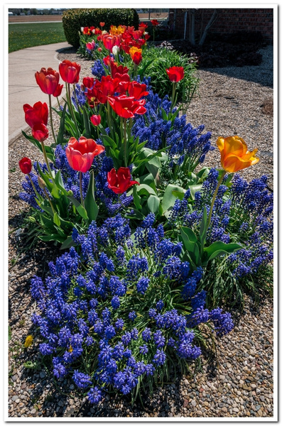2021 Spring Flowers D3500 DNG 2_71 by SDNowakowski