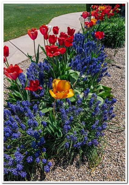 2021 Spring Flowers D3500 DNG 2_74 by SDNowakowski