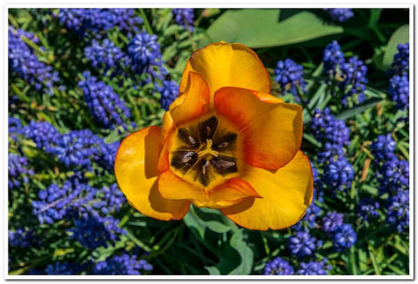 2021 Spring Flowers 2_83 by SDNowakowski