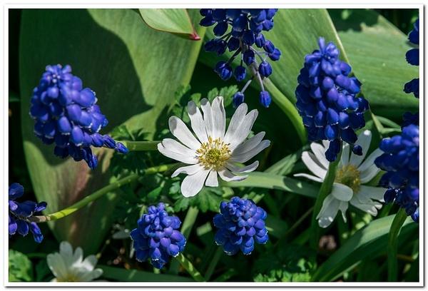 2021 Spring Flowers 2_86 by SDNowakowski