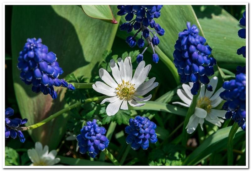 2021 Spring Flowers 2_86