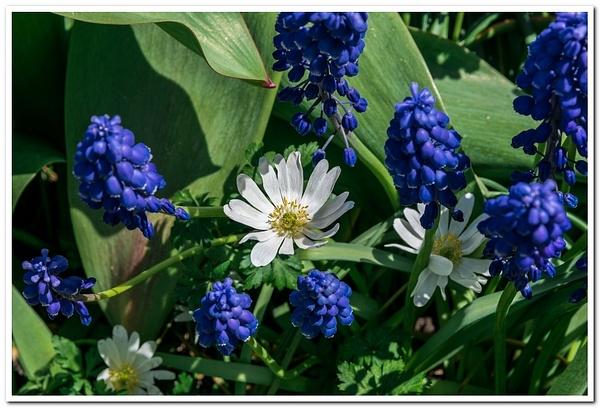 2021 Spring Flowers D3500 DNG 2_88 by SDNowakowski