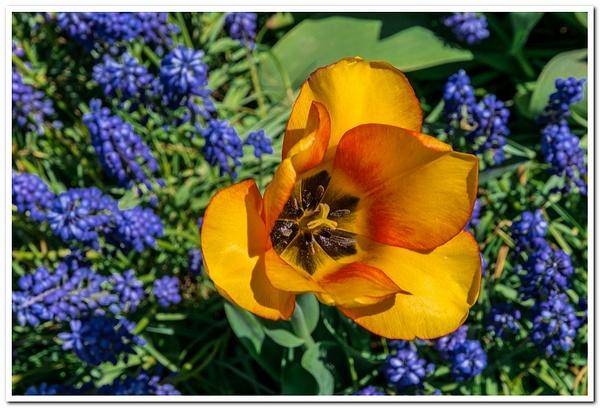 2021 Spring Flowers D3500 DNG 2_89 by SDNowakowski