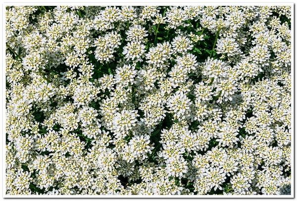 2021 Spring Flowers D3500 DNG 2_92 by SDNowakowski