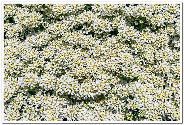 2021 Spring Flowers 2_95 by SDNowakowski