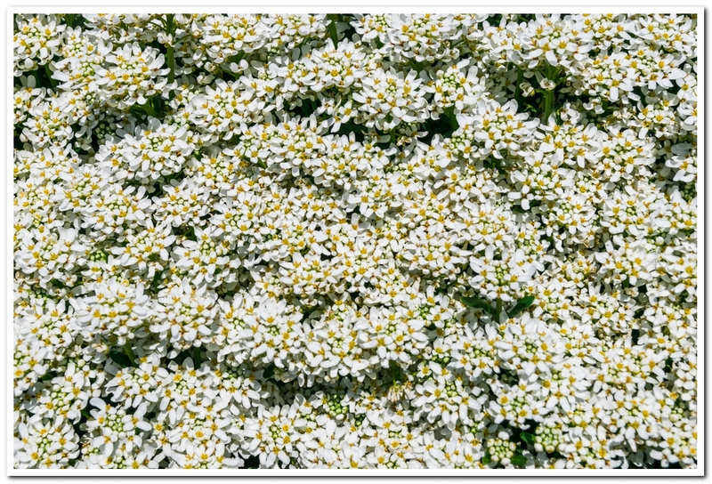 2021 Spring Flowers 2_95