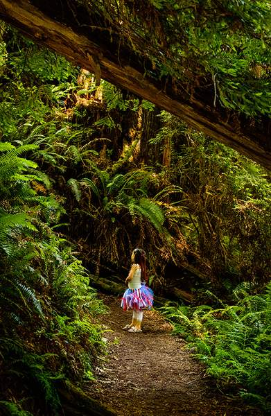 Elf Child in the Redwoods