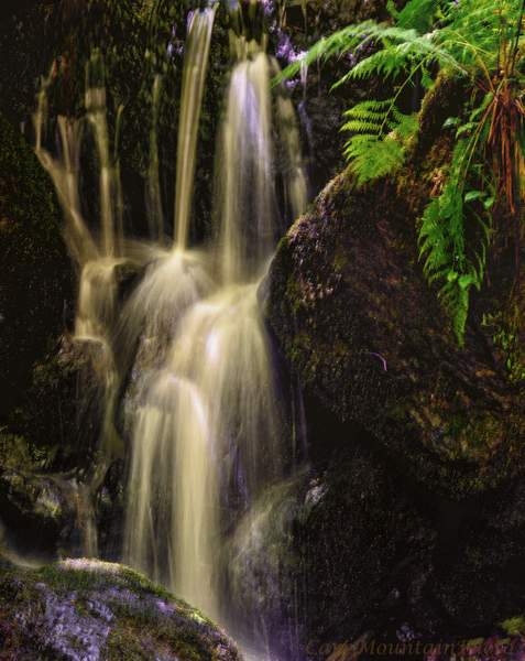 Waterfall In the Redwoods (1 of 1)