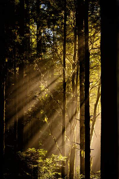 Sun Rays Burst Through Fog