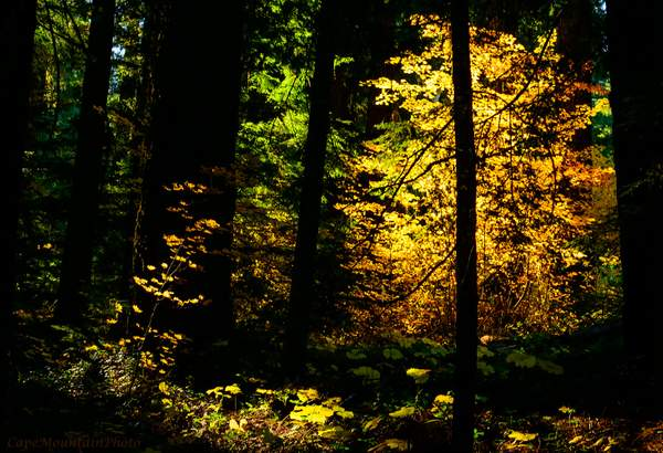 Magical Fall Forest