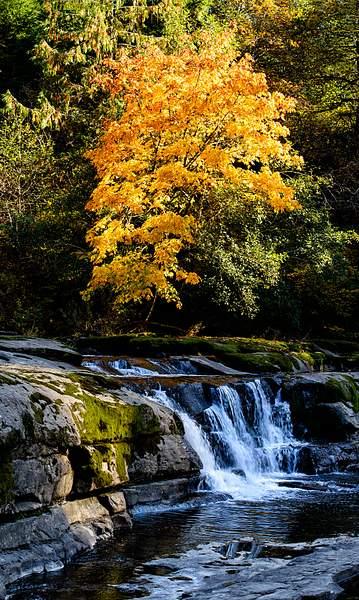 Fall Color At Vincent Creek