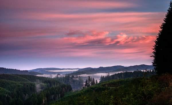 Dawn Breaks Over the Fog