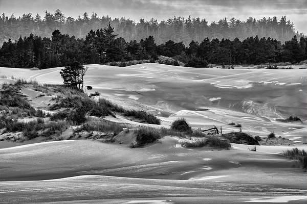 Dellenbach Dunes November black and white