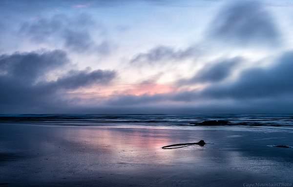 Kelp At Sunset