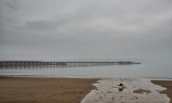 WInchester Bay Pier and Seagull