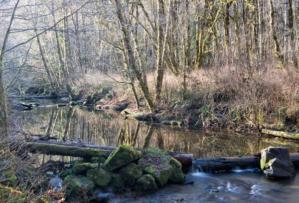 whitakker Creek