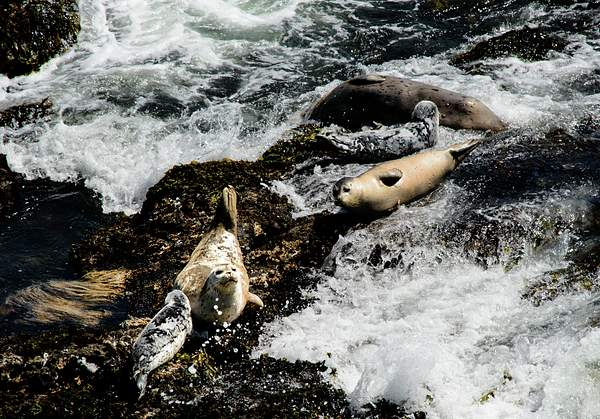 Mother and Baby Sea Lions