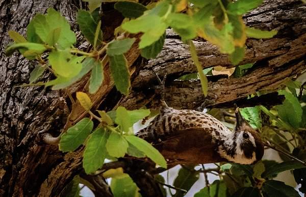 Arizona Birds (28 of 70)