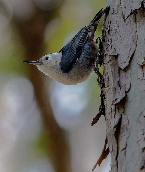 Arizona Birds (32 of 70)