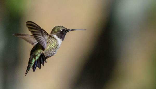 Arizona Birds (36 of 70)