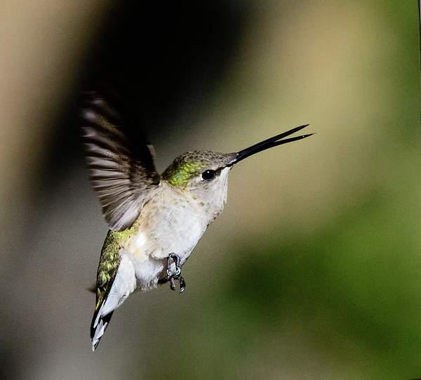 Arizona Birds (35 of 70)