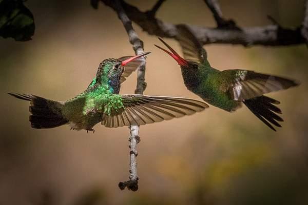 Arizona Birds (46 of 70)