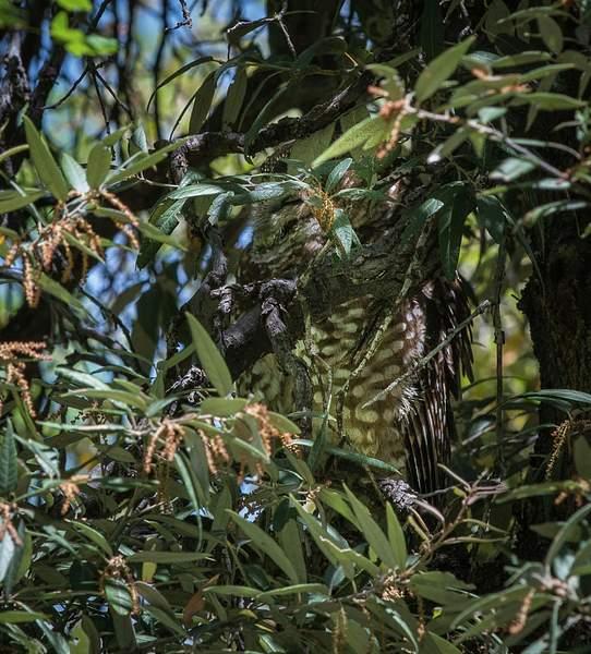Arizona Birds (50 of 70)
