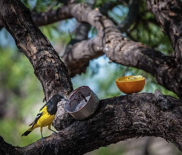 Arizona Birds (1 of 70)