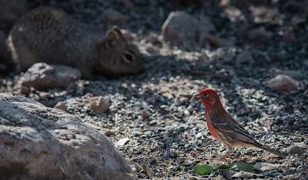 Arizona Birds (2 of 70)