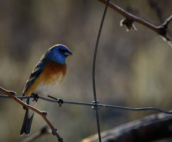 Arizona Birds (3 of 70)