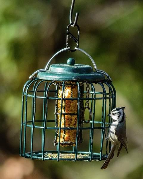 Arizona Birds (6 of 70)