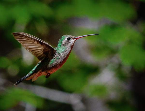 Arizona Birds (8 of 70)