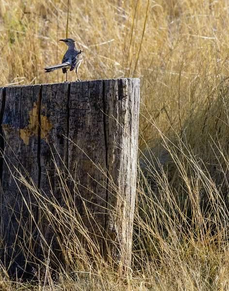 Arizona Birds (10 of 70)