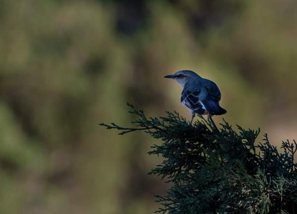 Arizona Birds (11 of 70)